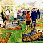 The commemorative planting of a 'Blanche Sweet' variety lilac