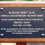 Close-up of the commemorative plaque for the 'Blanche Sweet' variety lilac