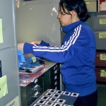 A volunteer filing transparencies