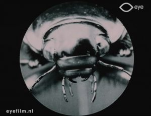 Le Dytique (The Water Beetle)